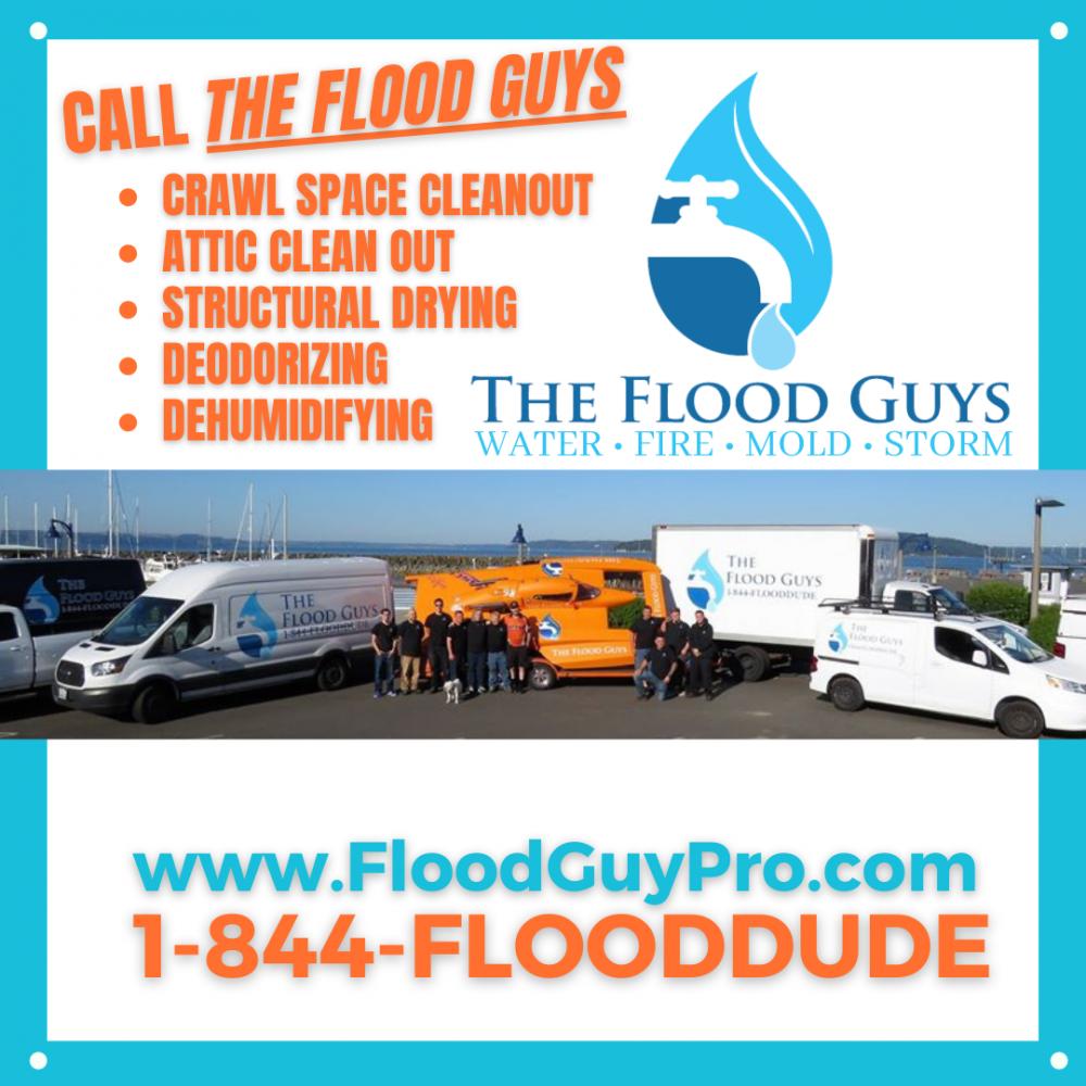 The Flood Guys Prevent Mold Growth