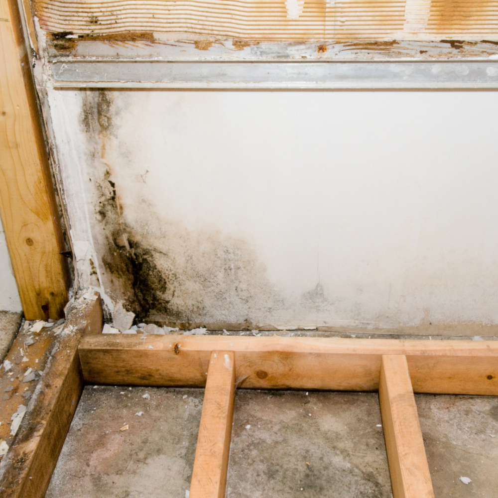 The Flood Guys Mold Remediation Removal and Treatment