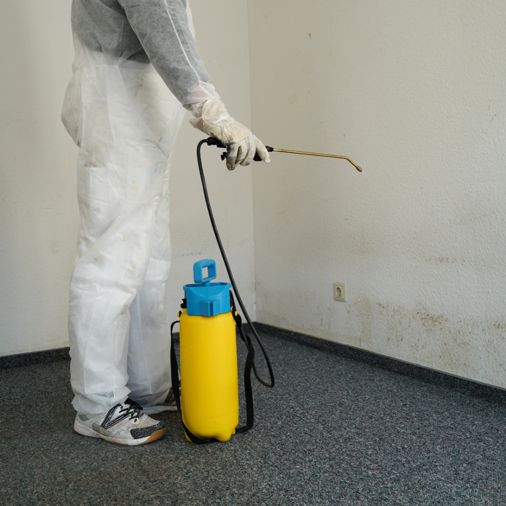 The Flood Guys Mold Remediation removal and treatment services